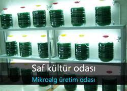 Mikroalg saf kültür odası