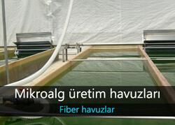 Mikroalg Üretim Havuzu