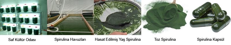 spirulina yosun kapsül tablet hasat havuz üretim